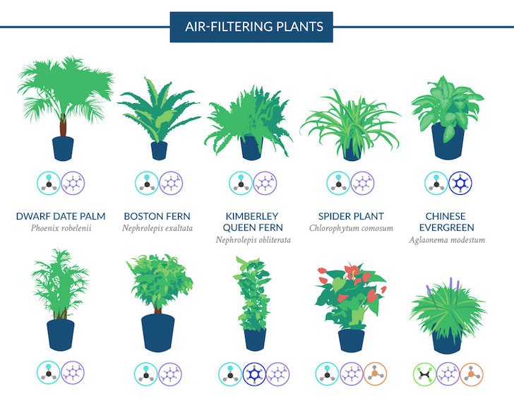 Air Filtering Houseplants