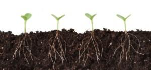 plant_roots_soil